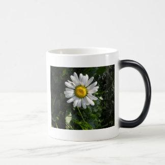Сamomile Coffee Mugs