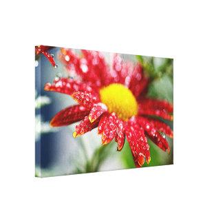 Сhrysanthemum Wrapped Canvas