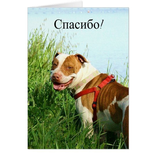 спасибо Russian Thank you Pitbull greeting card