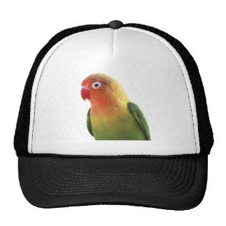 ルリゴシボタンインコ 優良製品 帽子