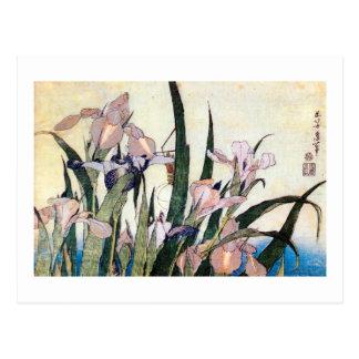 杜若ときりぎりす, 北斎 Iris and Grasshopper, Hokusai Postcard
