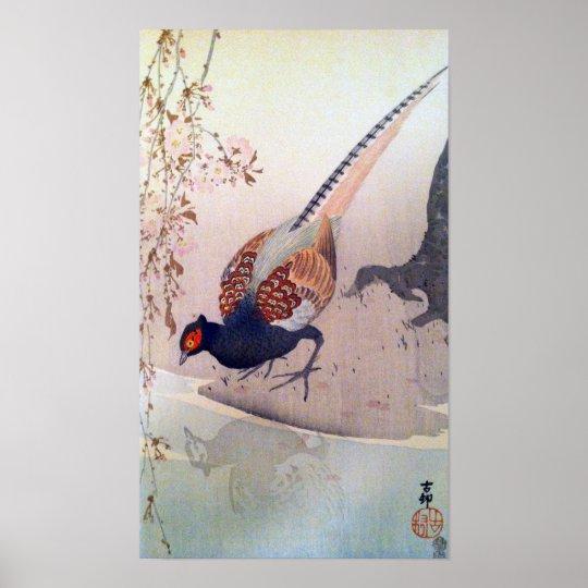 桜にキジ, 古邨 Pheasant and Cherry blossoms, Ohara Koson