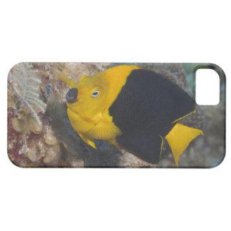 水中生命、魚:  多彩な石美しい iPhone 5 COVERS