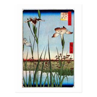 江戸 菖蒲 広重 Iris of Edo Hiroshige Post Card