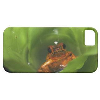 葉に隠れているいちごの毒カエル iPhone 5 COVER