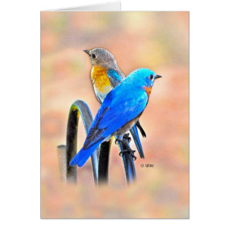 010 Bluebird Love Card 5x7 Matte