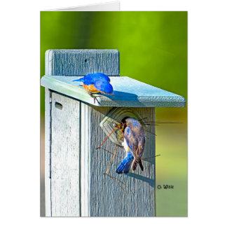 020 Bluebird Nesting Card 5x7 Matte