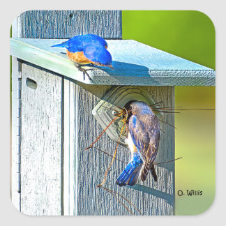 020 Bluebird Nesting Sticker 1.5x1.5 Sheet of 20