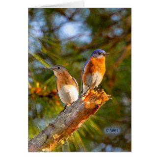 040 Bluebird Courtship Note Card 4.25x5.5 Matte