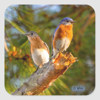 040 Bluebird Courtship Sticker 1.5x1.5 Sheet of 20