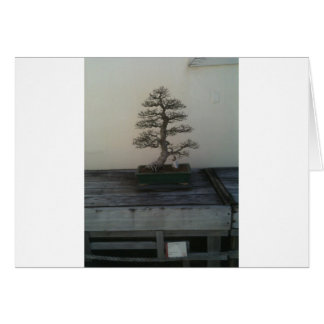 057.JPG CARD