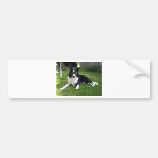 059border collie bumper sticker