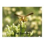 100_0028, Just Landed Postcard