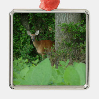 100_3076.JPG Photographed whitetail deer in field Christmas Ornament