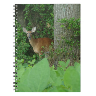 100_3076.JPG Photographed whitetail deer in field Notebook