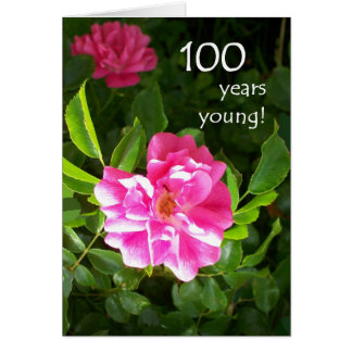 100th Birthday Card - Pink Roses