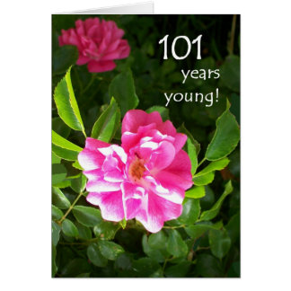 101st Birthday Card - Pink Roses