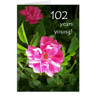 102nd Birthday Card - Pink Roses