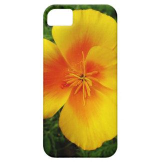 10440725_322100797946560_2256318108785012101_n.jpg iPhone 5 cases