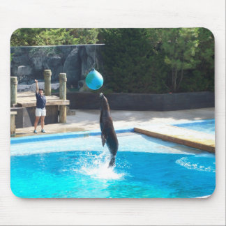 104_3686 - Seal Jumping - Mousepad