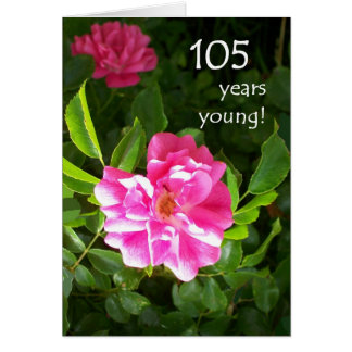 105th Birthday Card - Pink Roses