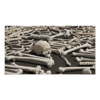 10 000 Bones Albuquerque Photographic Print