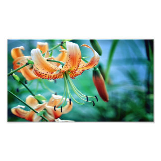 10 x 8 kodak_professional_photo_paper_satin photo print