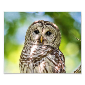 10x8 Barred Owl Photo Art