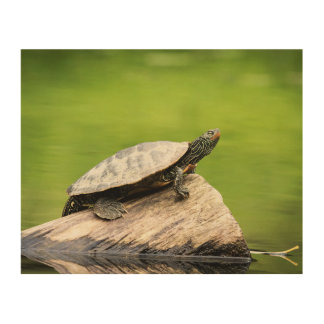 10x8 Painted Turtle on a log Wood Wall Art