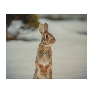 10x8 Rabbit in the snow Wood Wall Art