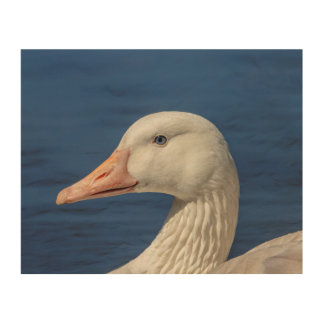 10x8 White Canadian Goose Wood Wall Art