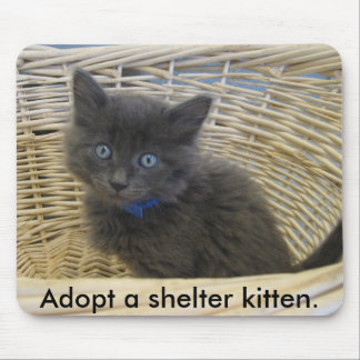 112907 petfinder 028, Adopt a shelter kitten. Mouse Pad