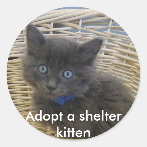 112907 petfinder 028, Adopt a shelter kitten Sticker