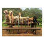 """11 Pups in a Row """"Say Cheese"""" - Greeting Card"""
