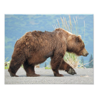 """11"""" x 14"""" photo of grizzly bear"""