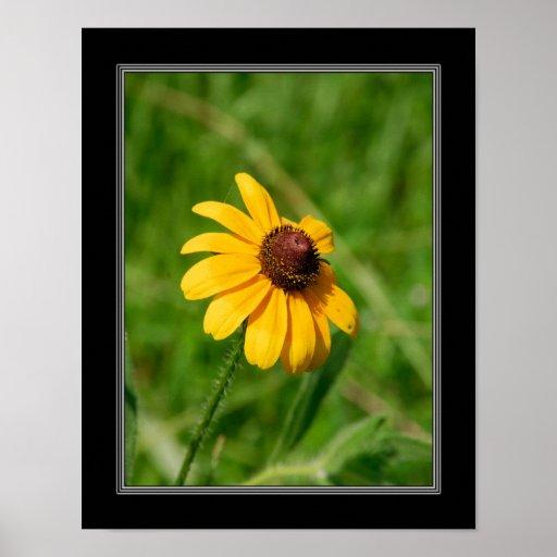 11x14 Wildflower Brown Eyed Susan Flower Posters