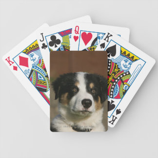 12 Week Old Border Collie Puppy Headshot Bicycle Playing Cards