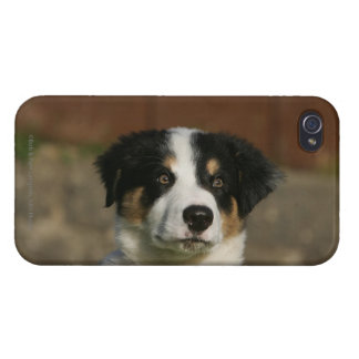 12 Week Old Border Collie Puppy Headshot Case For The iPhone 4