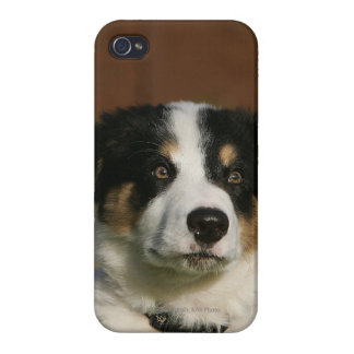12 Week Old Border Collie Puppy Headshot Cases For iPhone 4