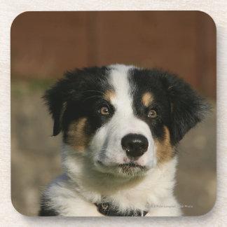 12 Week Old Border Collie Puppy Headshot Coaster