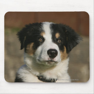 12 Week Old Border Collie Puppy Headshot Mouse Mat