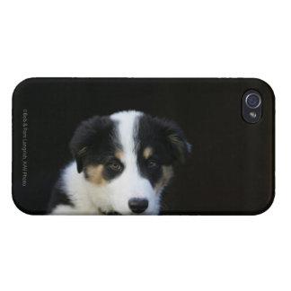 12 Week Old Border Collie Puppy iPhone 4 Case