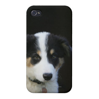 12 Week Old Border Collie Puppy iPhone 4 Cover