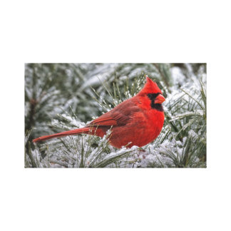 12 x12 Canvas Print The Red Cardinal