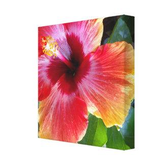"12"" x 12"", 1.5"", Hibiscus Flower Art Canvas Print"
