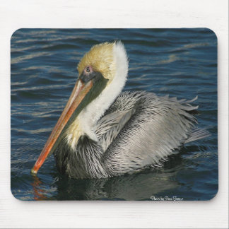144_4498, Photo by Pam Teague Mouse Pad