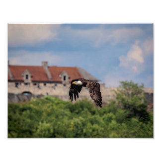 14x11  Bald Eagle passing Fort Ticonderoga Photo Print