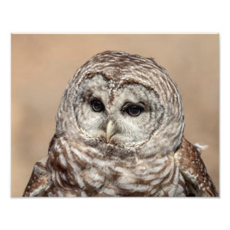 14x11 Barred Owl Photo Print