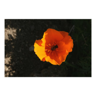 14x11 Flower Photo