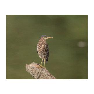 14x11 Green Heron on a log Wood Print